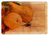 Postcard with pumpkin for Halloween — Stock Photo