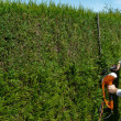 Stock Photo: Hedge trimmer