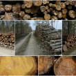 Forests - Stock Photo