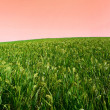 Crop landscape — Stock Photo
