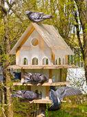 Многоэтажный дом для птиц — Стоковое фото