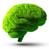 Green brain — Stock Photo