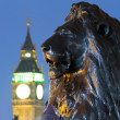 Lion in London's Trafalgar Square with Big Ben in the background — Stock Photo