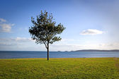Tree by the sea — Stock Photo
