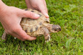 Female hands holding turtle — Stock Photo