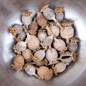 Dry poppy heads — Stock Photo