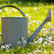 Tin watering can in a meadow — 图库照片