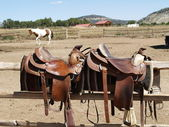 Saddles with a horse in the background — Stock Photo