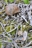 Snail in the forrest — Stock Photo