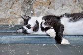 Street cat lying on a bench — Stock Photo