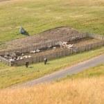 Small farm on a meadow — Stock Photo #37431361