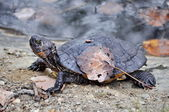 Black turtle and a leaf on its shield — Stock Photo