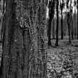 Dark forest — Stock Photo #39680435