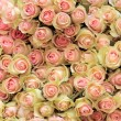 Big bunch of cut light pink roses — Stock Photo