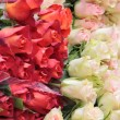 Big bunch of white and red roses — Stock Photo