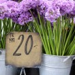 Purple flowers in a flower shop — Stock Photo