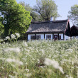 Idyllic thatched cottage — Stock Photo