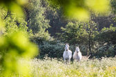 White horses in flower meadow — Stock fotografie