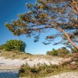 Stock Photo: Pine on sandy beach on Bornholm