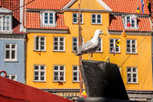 Seagull on historic ship in front of colorful house — Stock Photo