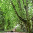 Stock Photo: Green avenue with old trees
