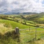 Green meadows near Dingle — Stock Photo #37686693