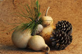 Calabash and pine cones — Stock Photo