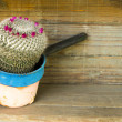 Flowering cactus in a rusty pot — Stock Photo