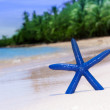 Blue starfish on white sand beach — Stock Photo