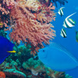 Royalty-Free Stock Photo: Colorful underwater world