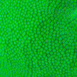 Stock Photo: Macro shoot of green hard coral