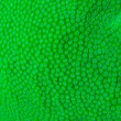 Macro shoot of green hard coral - Stock Photo