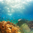 Exciting underwater panorama — Stock Photo