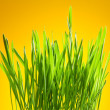 Foto Stock: Green grass on yellow background