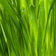 Green grass after rain — Stock Photo