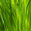 Stock Photo: Green grass after rain