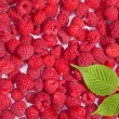 Ripe raspberries wallpaper - Stock Photo