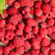 Scattered ripe raspberries - Stock Photo