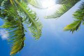 Słońce świeci przez drzewa liści palmowych — Zdjęcie stockowe