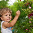 Stock Photo: Funny kid picking up red currants