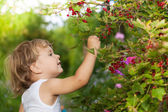 Sunny day in the garden — Stock Photo
