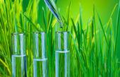 Saf yeşil — Stok fotoğraf