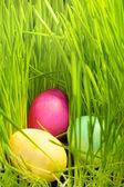 Tres huevos de pascua en pasto — Foto de Stock