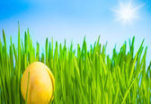 Yellow Easter egg — Stock Photo