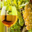 White wine and grapes — Stock Photo #24689301