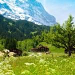 Alps in Switzerland — Stock Photo #28469669