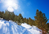 Forest at winter in mountains — Stock Photo