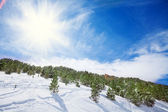 Panoramic shot of forest in winter — Stock Photo