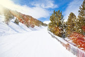Piste in mountains through forest — Stock Photo