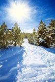 Snow path in snowy mountain forest — Stock Photo